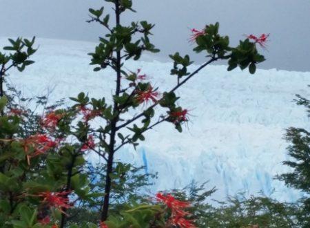 Patagonia – El Calafate